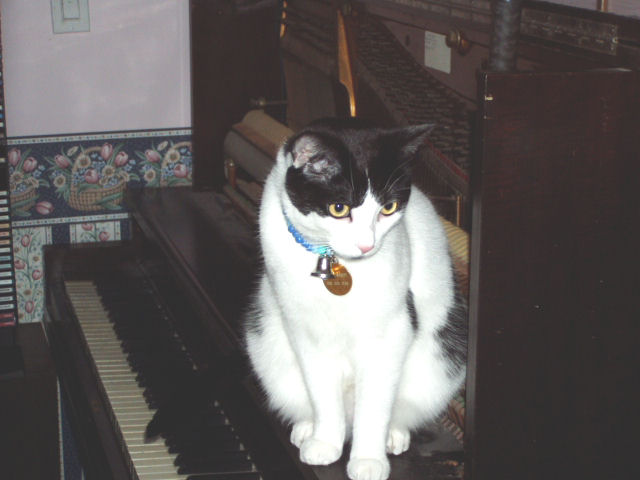 Name:  OS HELPING HUBS TO TURN PIANO.jpg