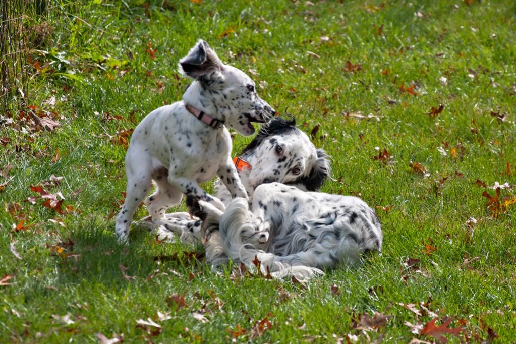 Name:  Lili and Loon playing 10-23-19 H.jpg Views: 63 Size:  165.0 KB