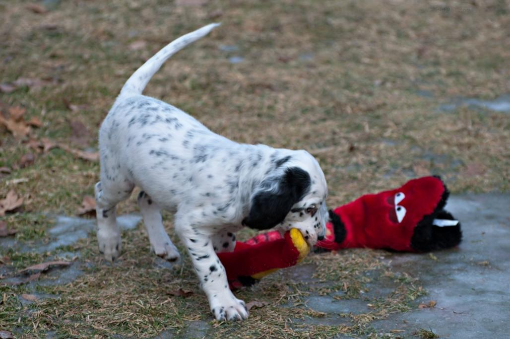 Name:  Grabbing the snake by the tail 1-13-19.jpg Views: 52 Size:  88.5 KB