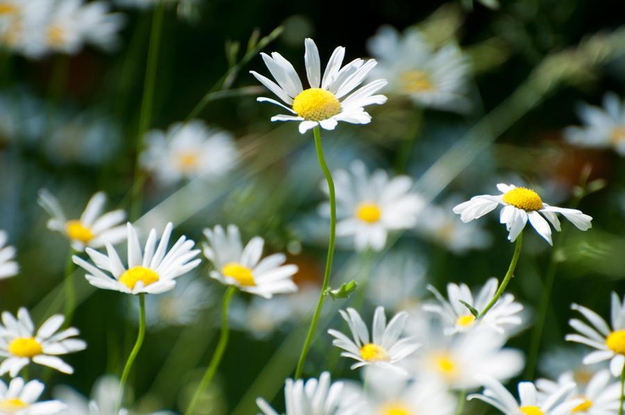 Name:  Front lawn 6-17-11 E.jpg Views: 364 Size:  63.9 KB