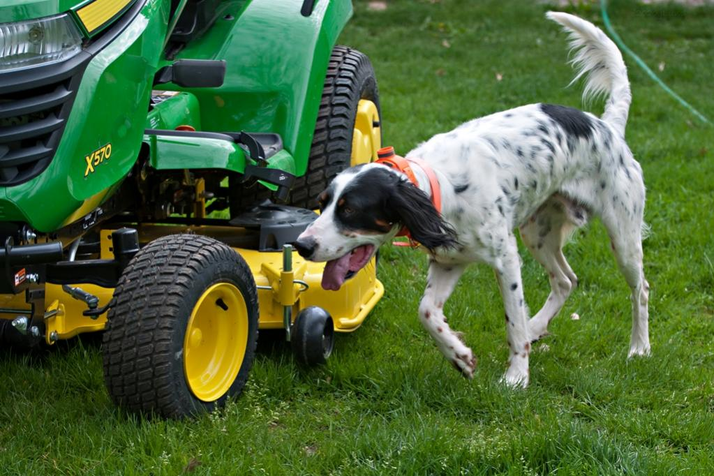 Name:  Hunter checking out the new tractor 5-16-20.jpg Views: 38 Size:  123.5 KB