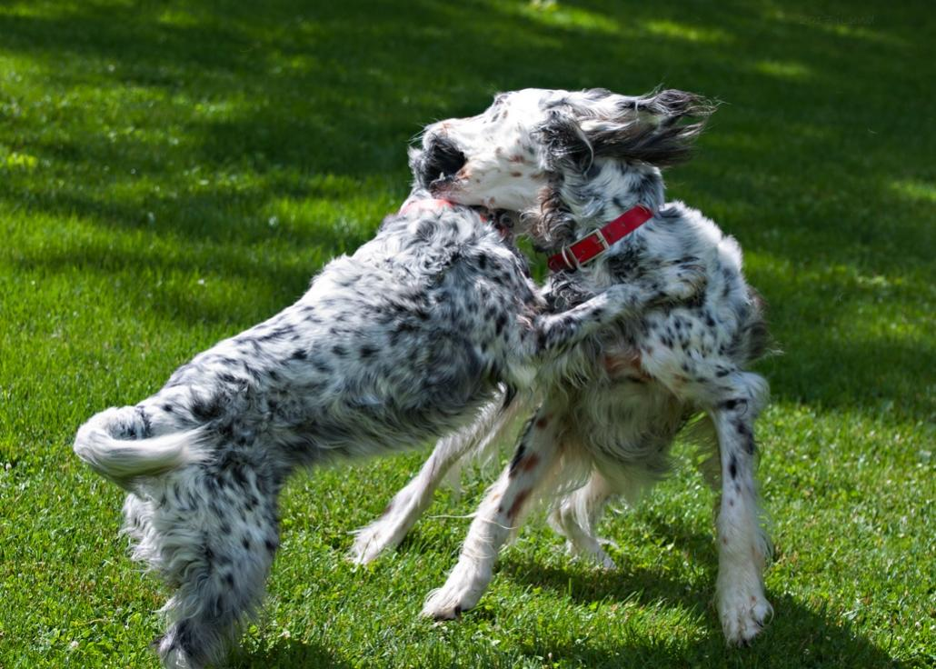 Name:  Brier and Grace wrasslin 6-26-17 H.jpg Views: 70 Size:  130.6 KB