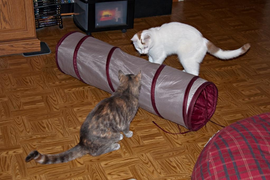 Name:  Playing around the crinkle tunnel 9-21-19 A.jpg Views: 2420 Size:  95.3 KB
