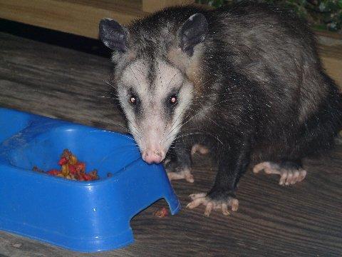 Name:  Petey having dinner.JPG Views: 841 Size:  37.6 KB
