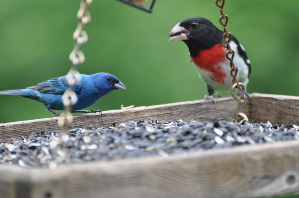Name:  Red, white and blue feeder 6-20-10 A.jpg