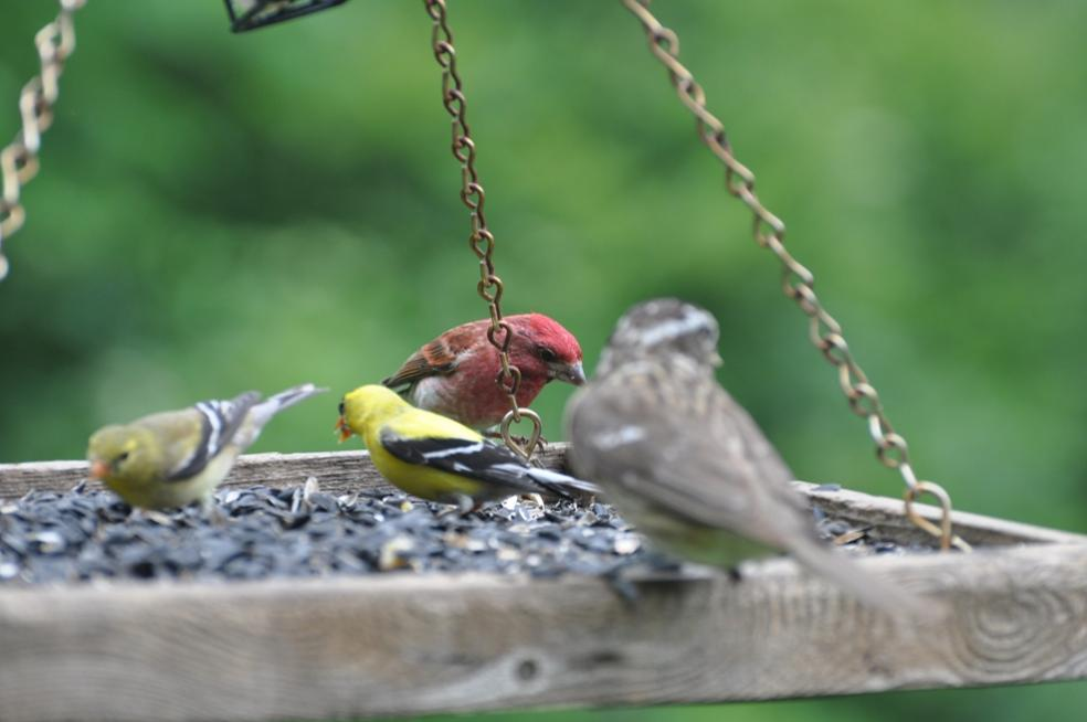 Name:  Busy feeder 6-19-10 D.jpg