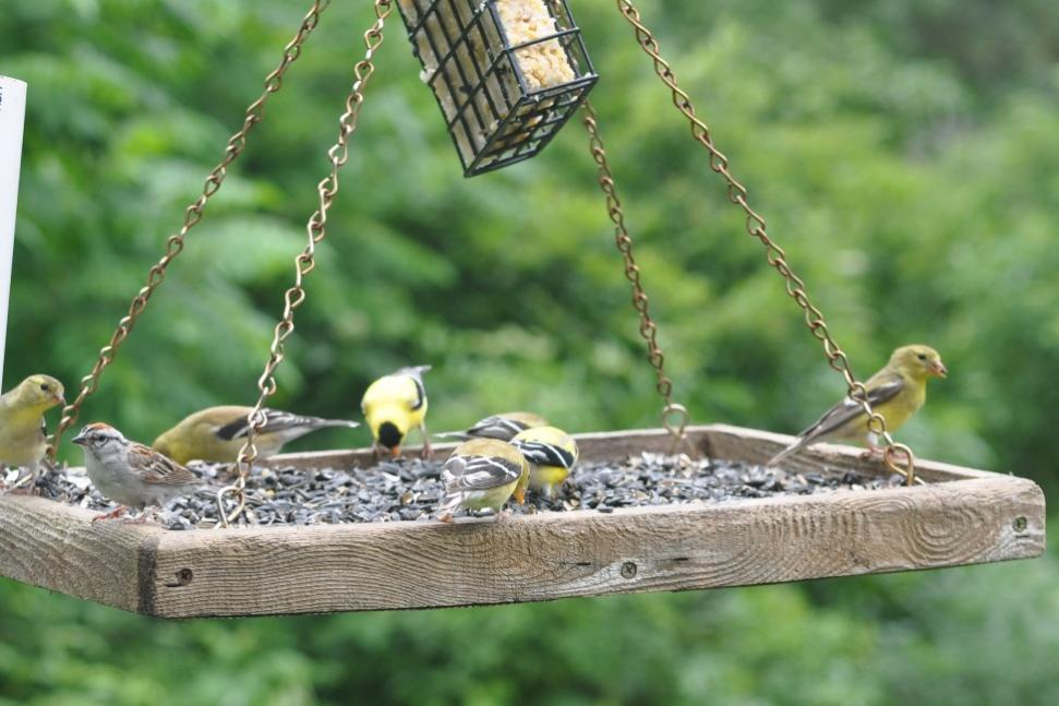 Name:  Busy feeder 6-19-10 G.jpg
