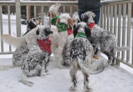 Name:  festive bunch.jpg Views: 53 Size:  25.0 KB