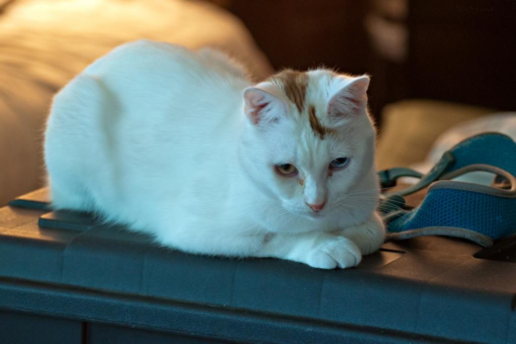 Name:  JD in the family room 6-17-19.jpg Views: 180 Size:  54.8 KB