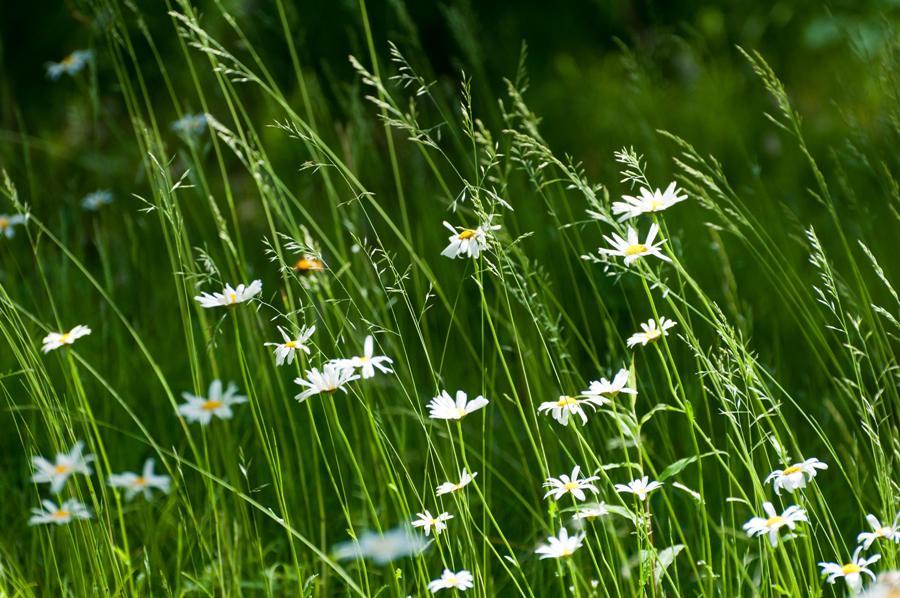 Name:  Front lawn 6-17-11 F.jpg Views: 168 Size:  115.1 KB