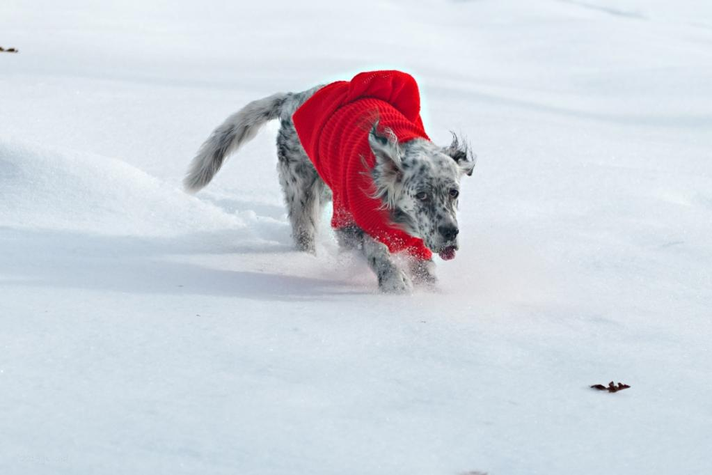 Name:  Grace taking her new red sweater out for a spin 12-15-19.jpg Views: 46 Size:  42.7 KB