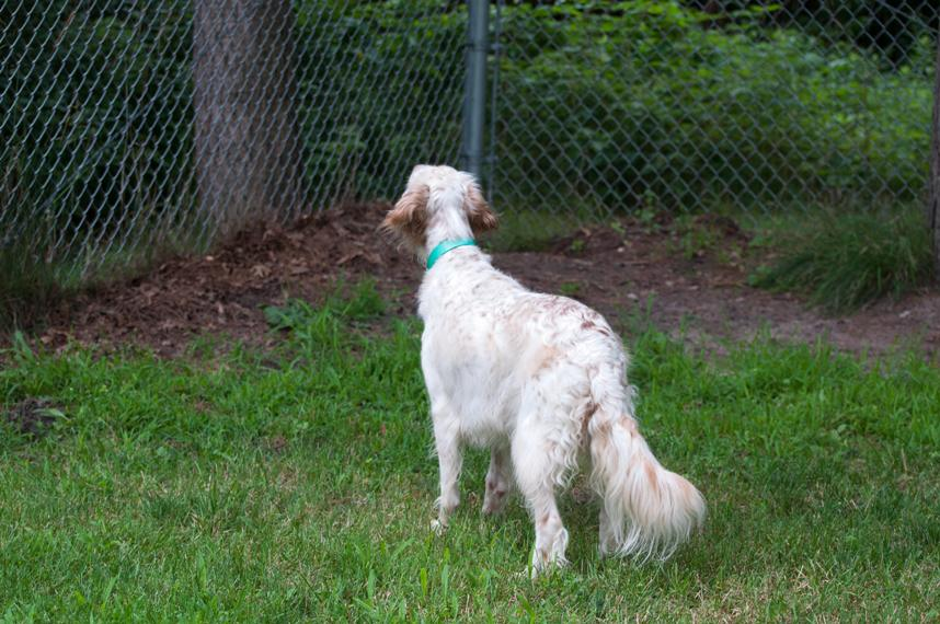 Name:  Macie escorts the Dangerous Butterfly to the fence 8-1-11.jpg