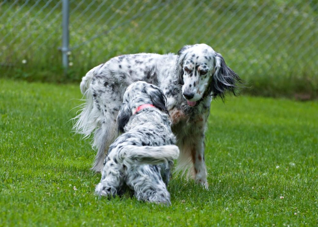 Name:  Brier and Grace wrasslin 6-26-17 P.jpg Views: 47 Size:  112.4 KB