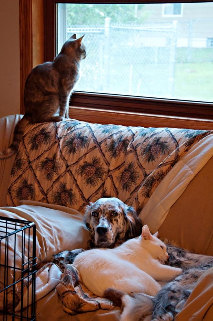 Name:  Both of the cats love Grace 9-17-19.jpg Views: 376 Size:  102.7 KB