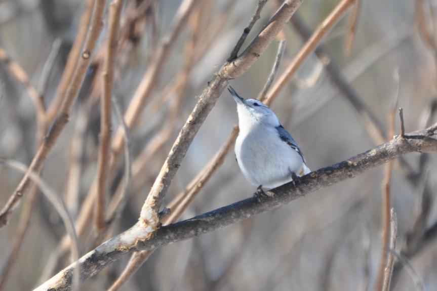 Name:  Look! It's a bird! 2-12-10.jpg Views: 97 Size:  45.9 KB