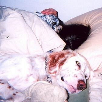 Name:  Sleeping with Mom, Ember and Grace - Fall 2007.jpg