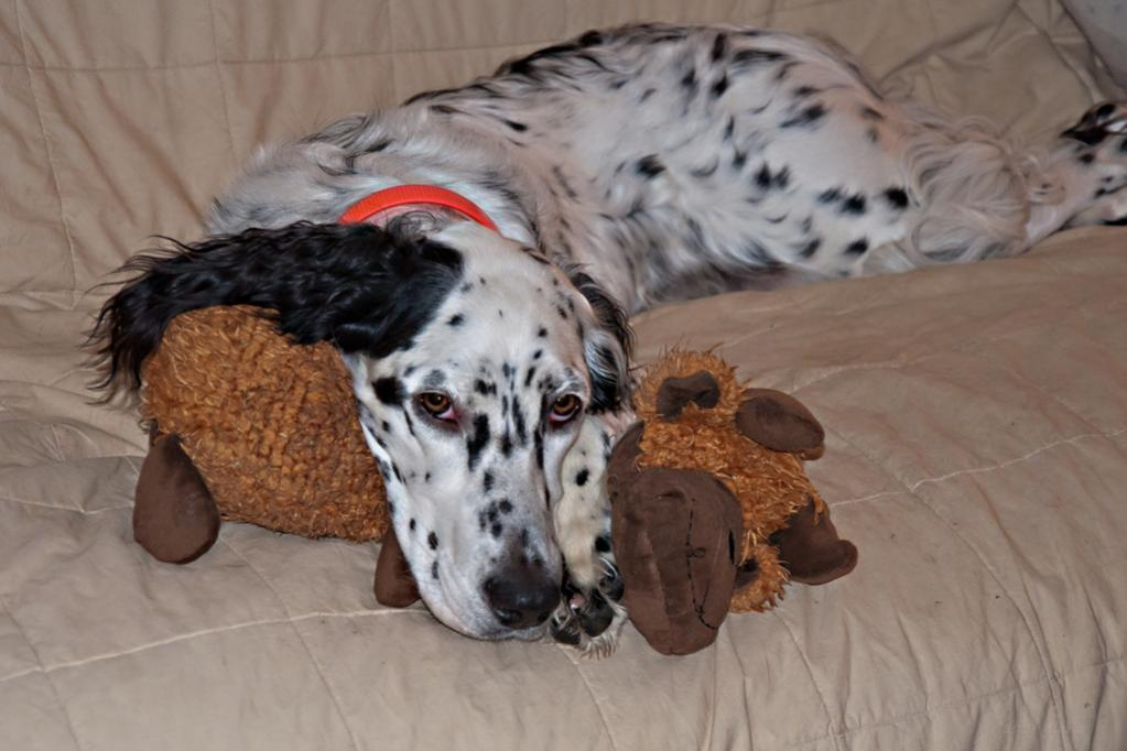 Name:  Lili using her Big-Butt Moose as a pillow 9-14-19 A.jpg