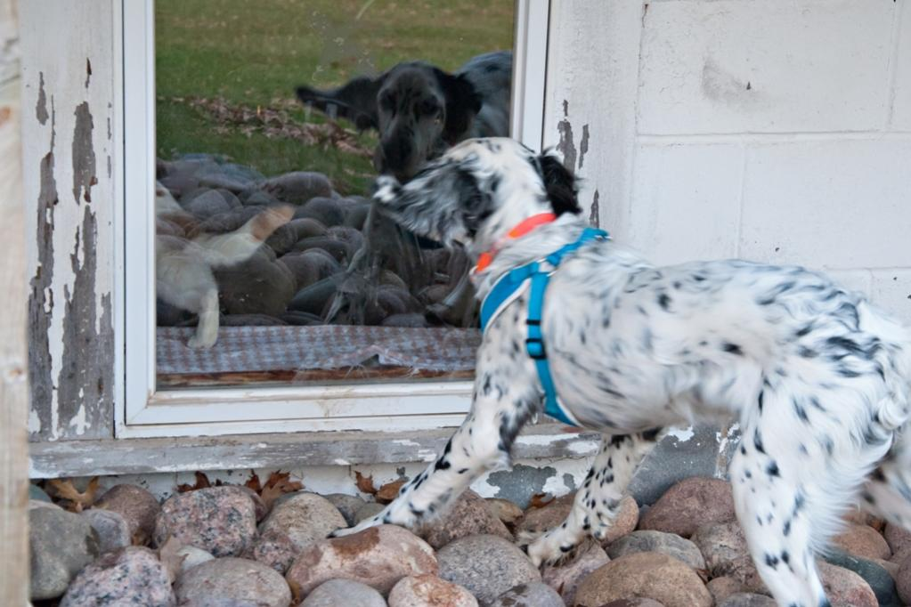 Name:  JD and Lili at the window 4-21-19 A.jpg