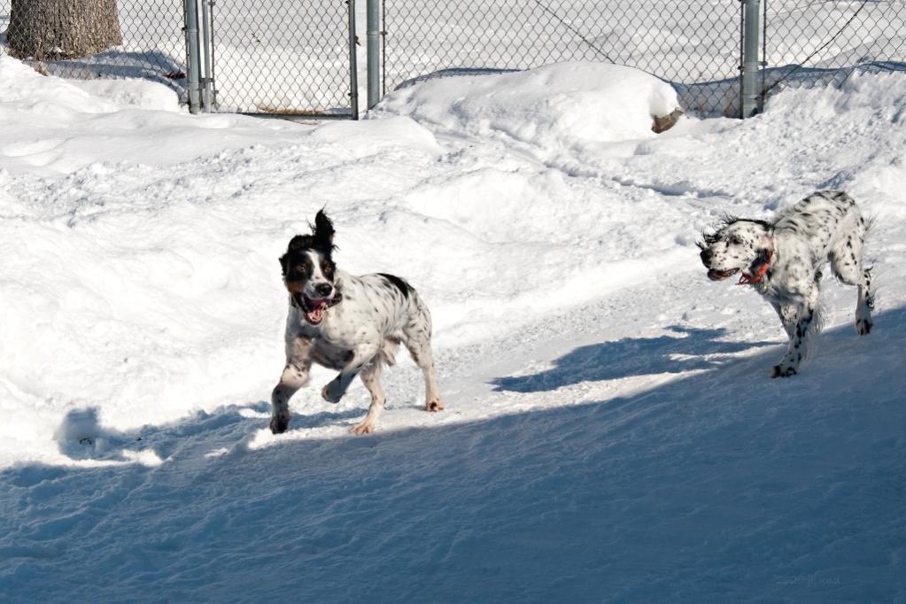 Name:  Chase! 2-10-20 B.jpg Views: 62 Size:  104.6 KB