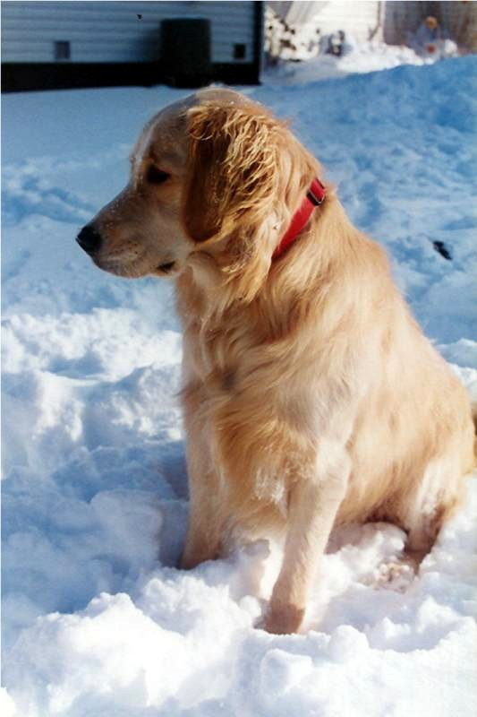 Name:  Bailey in the snow.jpg