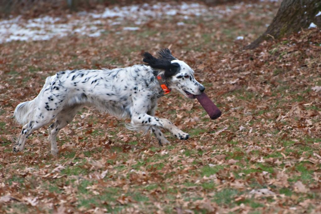Name:  Time for some bumper chasing 11-16-19.jpg Views: 180 Size:  116.6 KB