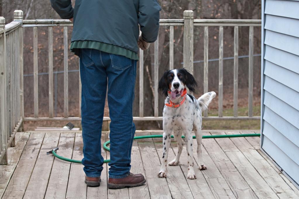 Name:  Hunter about to demonstrate paw-washing 101 4-9-20.jpg Views: 40 Size:  99.1 KB