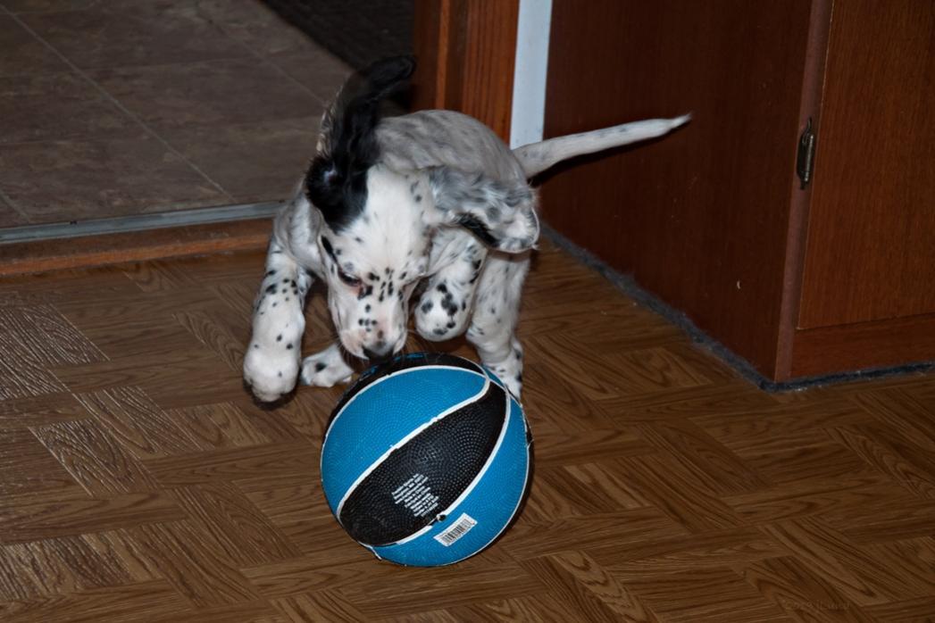 Name:  Git dat ball, Lili! 1-17-19.jpg Views: 420 Size:  81.6 KB