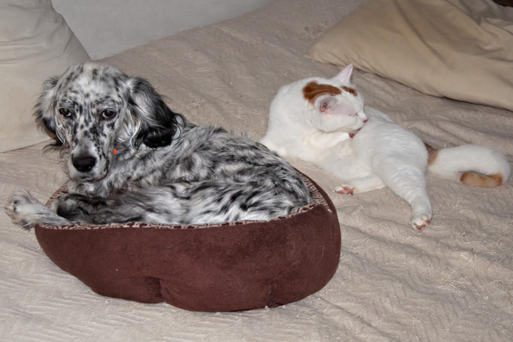 Name:  Grace comandeered JDs bed 1-25-17.jpg Views: 51 Size:  84.5 KB