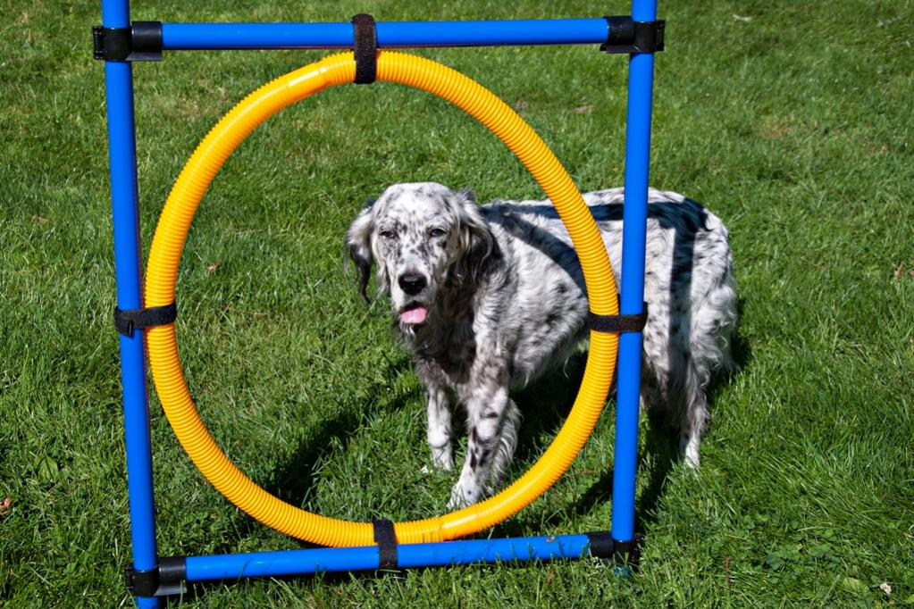 Name:  Grace contemplating the Hoop 8-30-19.jpg