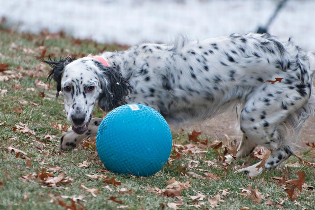Name:  Lili with her birthday ball 11-16-19 A.jpg