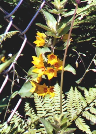 Name:  Garden 2005-Yellow mystery flower in the well garden 6-12-05.jpg Views: 124 Size:  81.1 KB