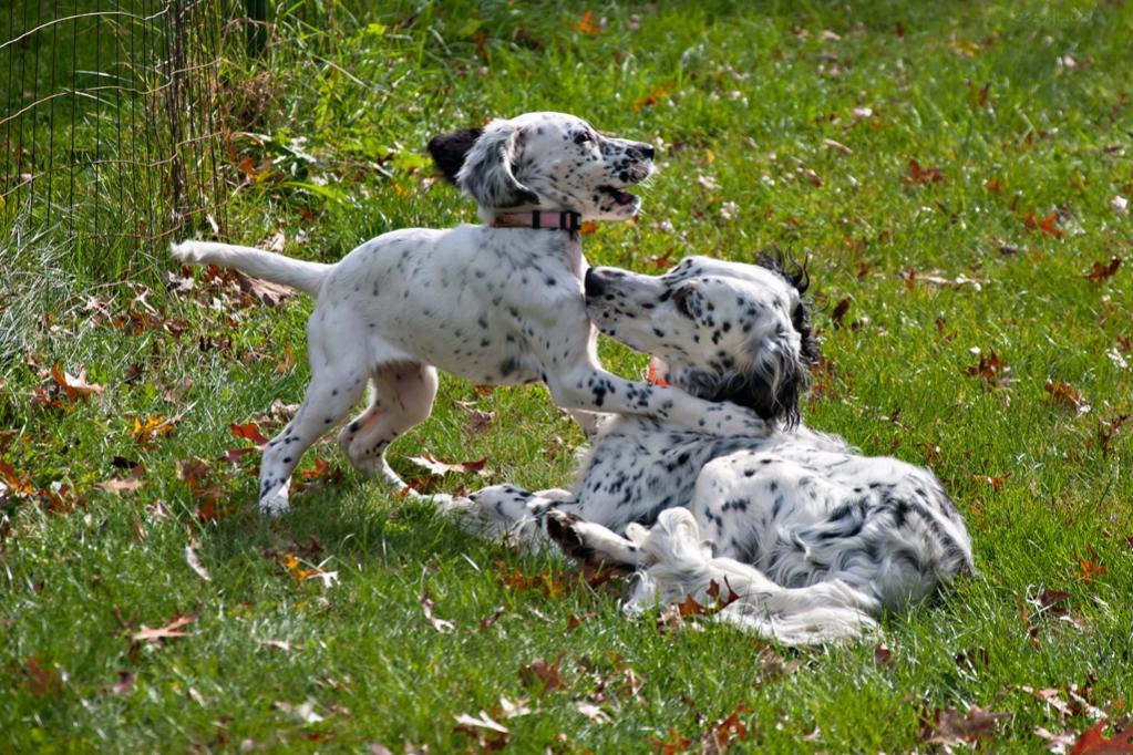 Name:  Lili and Loon playing 10-23-19 G.jpg Views: 11 Size:  164.2 KB