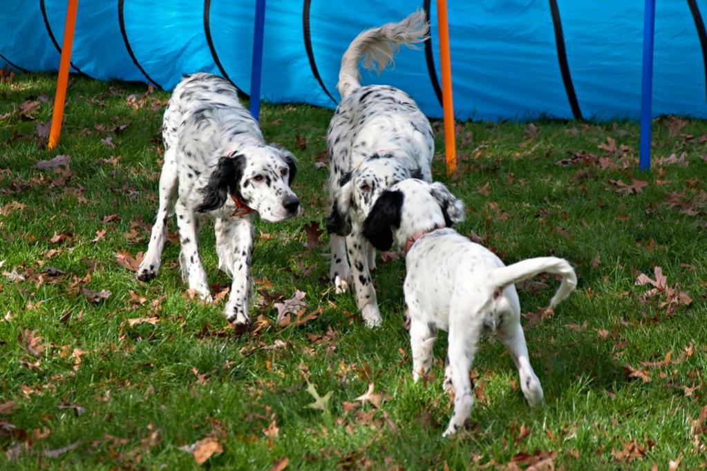 Name:  Loon wants to know what Colbi and Lili are looking at 10-23-19.jpg Views: 99 Size:  136.8 KB