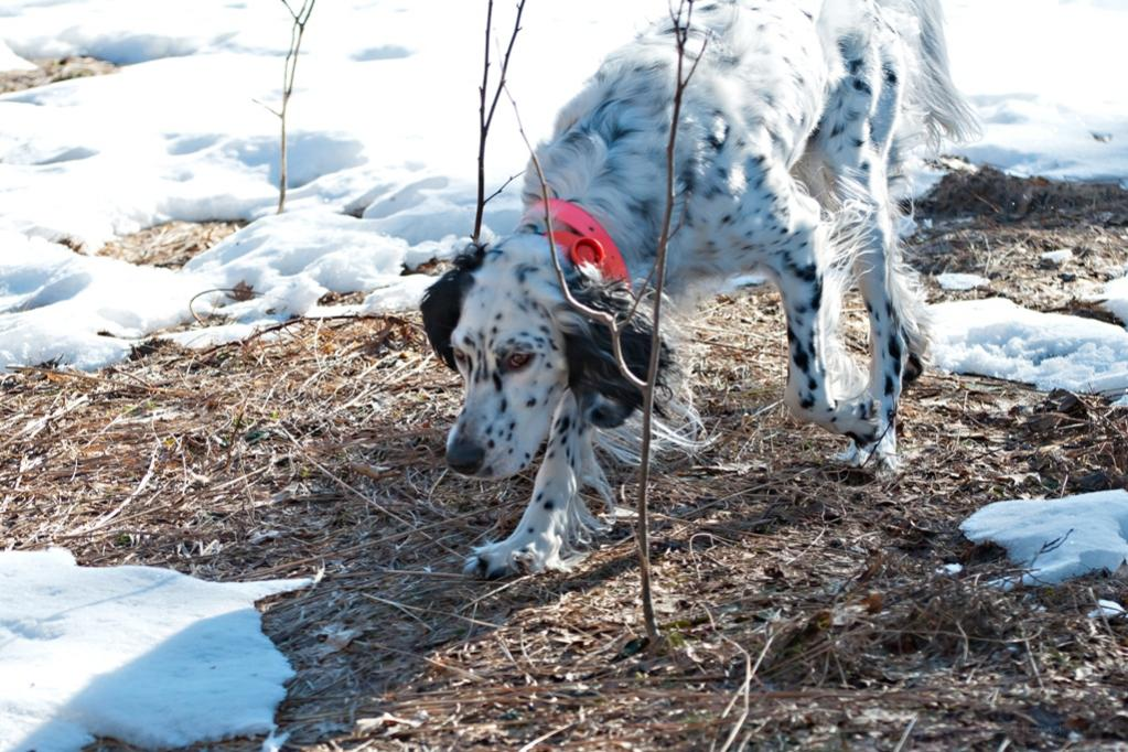 Name:  Lili coming out of the meadow 3-21-20.jpg Views: 131 Size:  144.1 KB