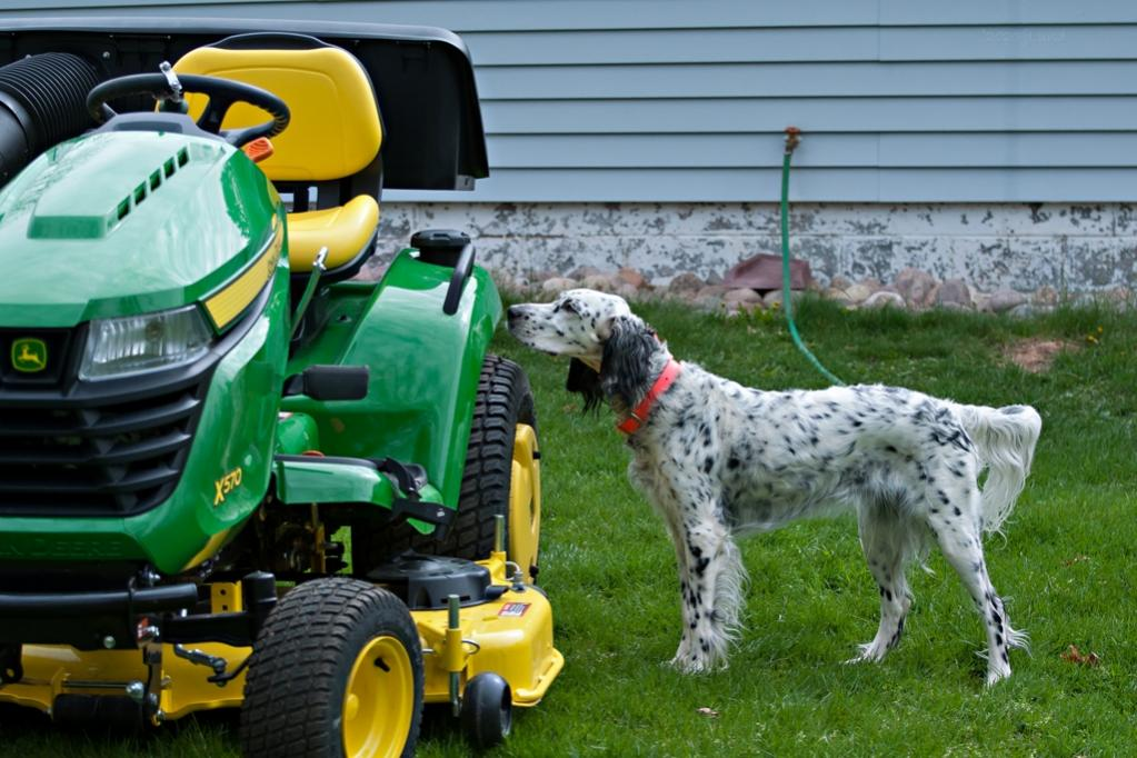 Name:  Lili making a last safety check of the new tractor 5-16-20.jpg Views: 93 Size:  112.7 KB