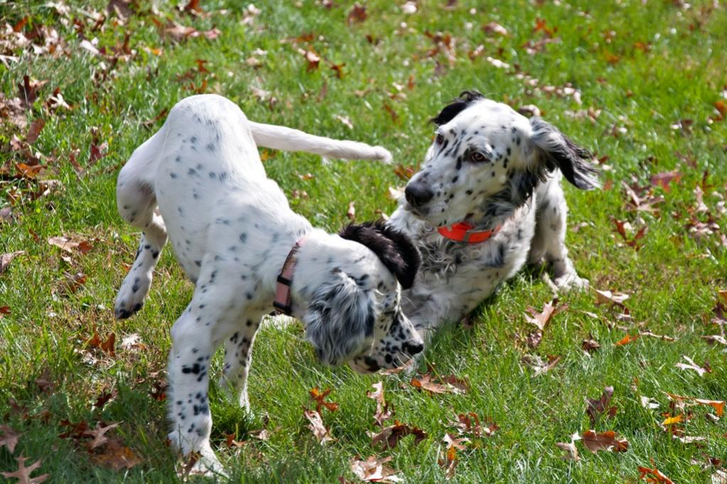 Name:  Lili and Loon playing 10-23-19 A.jpg Views: 31 Size:  160.4 KB