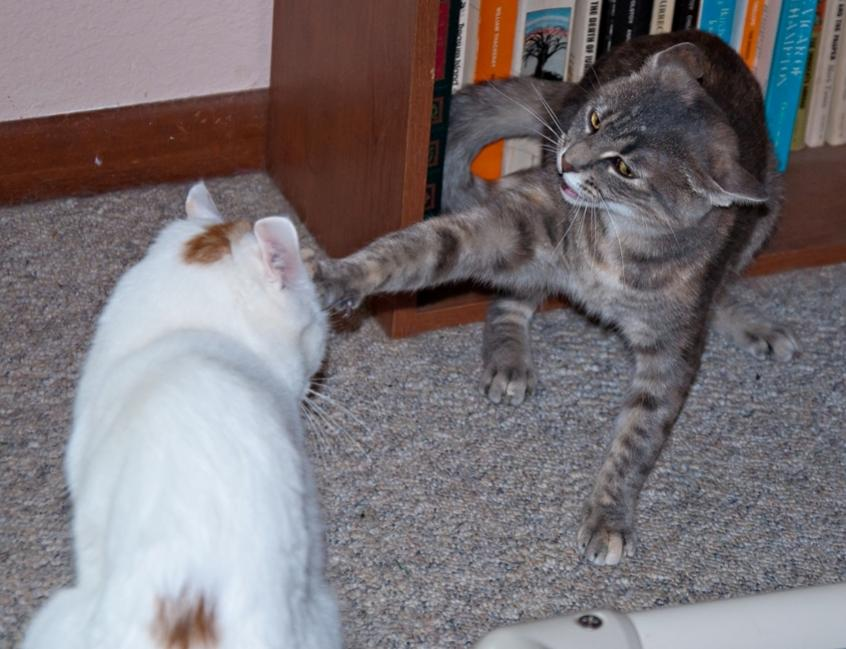 Name:  Hold it right there, buster! 9-11-19 pets.jpg Views: 530 Size:  74.3 KB