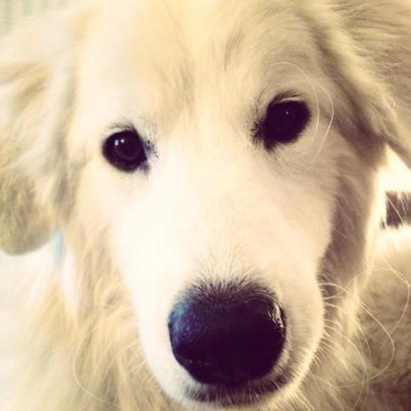 Name:  Layla 3.jpg Views: 182 Size:  80.5 KB