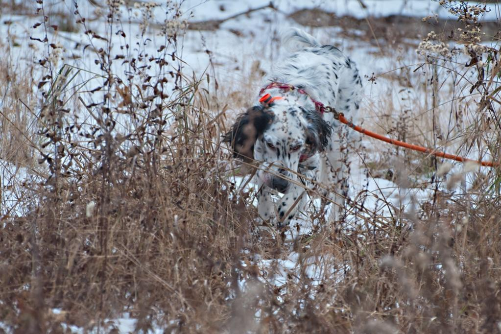 Name:  Lili mousing in the grass on her birthday walk 11-16-19 B.jpg Views: 165 Size:  144.2 KB