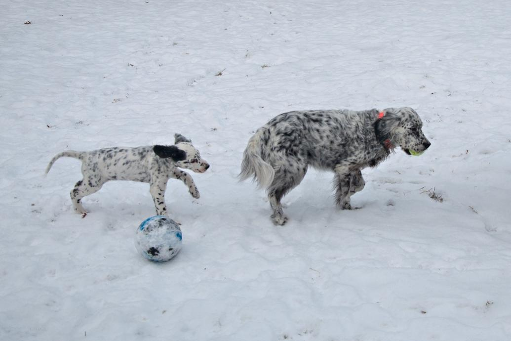 Name:  Playing keep-the-ball-away-from-Lili 1-24-19 B.jpg