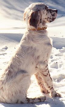 Name:  Evan sitting in the snow 2-13-99.jpg Views: 72 Size:  66.9 KB