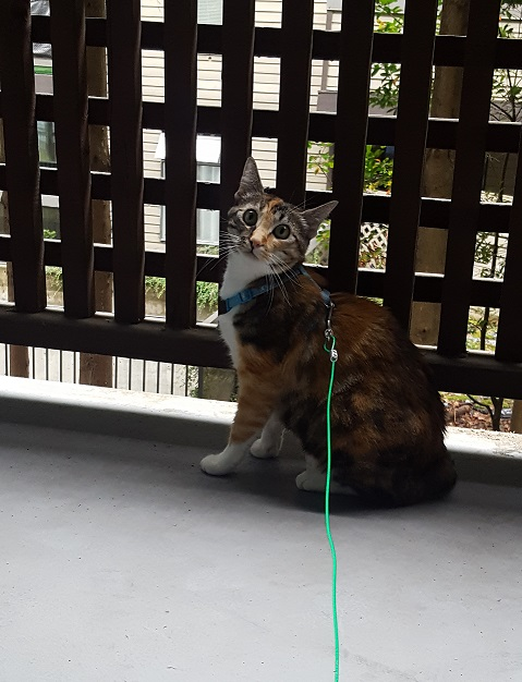 Name:  Lilly balcony.jpg Views: 50 Size:  118.3 KB