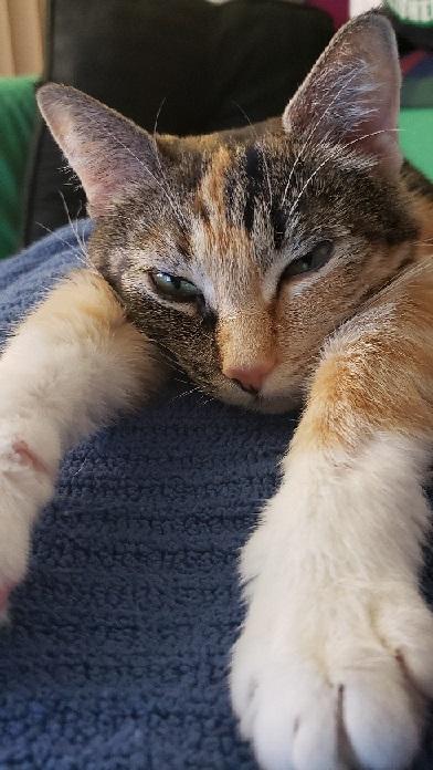 Name:  Sleepy Lilly.jpg Views: 48 Size:  121.6 KB