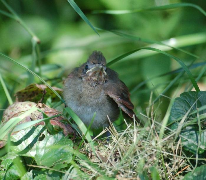 Name:  bird1.jpg Views: 70 Size:  66.2 KB