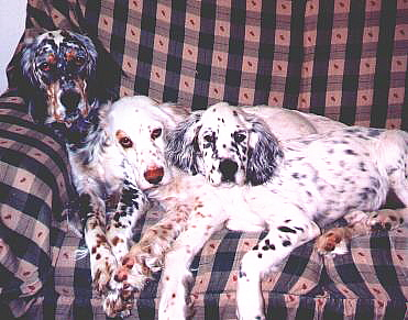 Name:  Trifecta--Cass, Ember, and Cole 2-18-03.jpg Views: 151 Size:  80.1 KB
