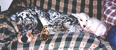 Name:  Cass and Ember resting.jpg Views: 143 Size:  59.1 KB