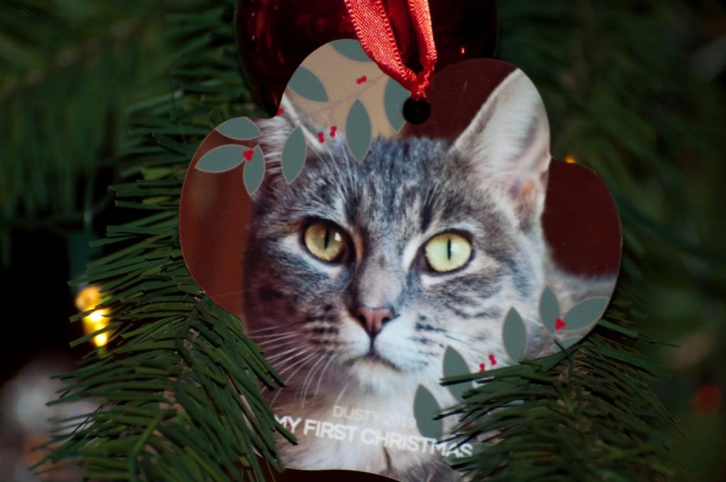 Name:  Dusty 2019- My First Christmas.jpg Views: 45 Size:  69.4 KB