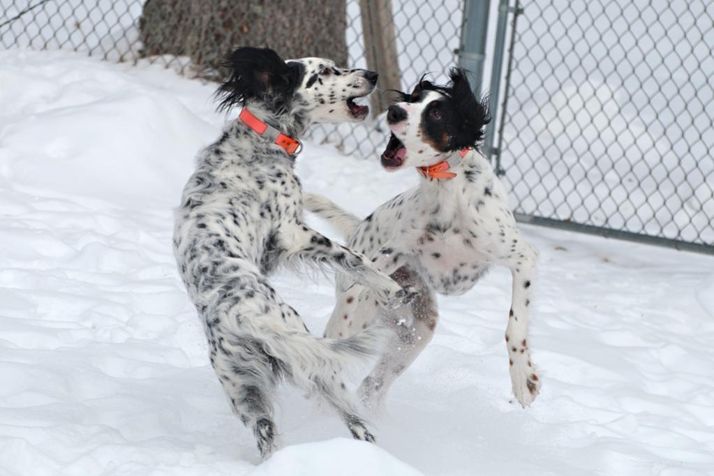 Name:  Dance, puppies, dance! 2-18-21.jpg Views: 36 Size:  74.7 KB