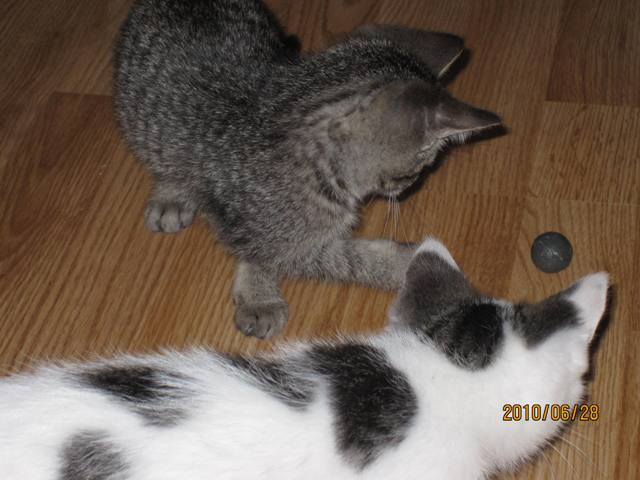 Name:  kitten and ball.jpg