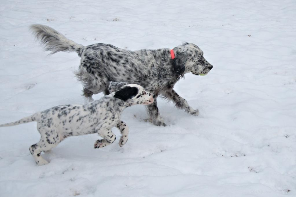 Name:  Playing keep-the-ball-away-from-Lili 1-24-19 C.jpg Views: 50 Size:  55.1 KB